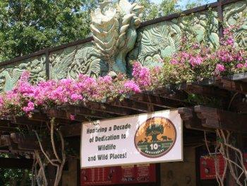 Disney Doers Diary: Celebrating Earth Day at Disney's Animal Kingdom