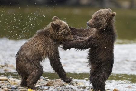 bears5346e4aef1756