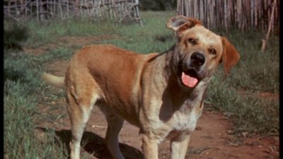 old_yeller_pic-_2