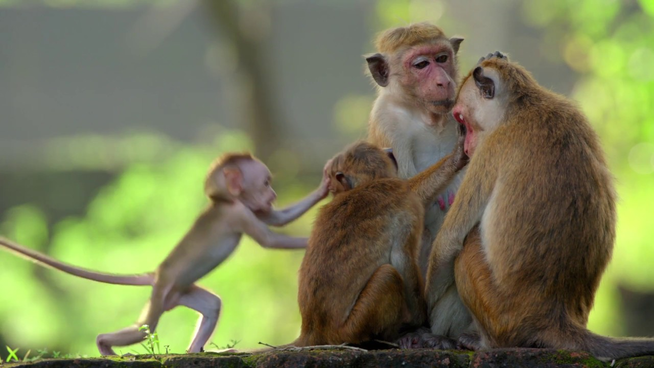 Disneynature's Growing Up Wild to be Released December 6