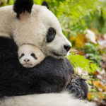 Movie Review: Disneynature Born in China