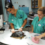 Disney's Animal Kingdom Enhancing Animal Hopsital