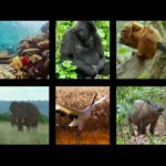 Disneynature Highlights Wildlife Legacy and Conservation Impact
