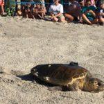 Tour de Turtles from Disney's Vero Beach Resort