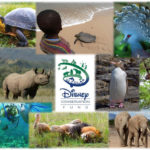 Disney Conservation Fund to Award $8 Million in 2018