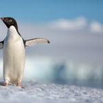 "First Trailer for Disneynature's ""Penguins"" Debuts"