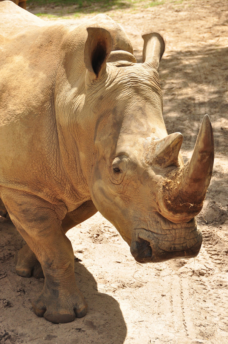 Up Close with Rhinos