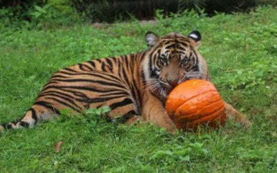 Disney's Animal Kingdom Celebrates Halloween with Pumpkins