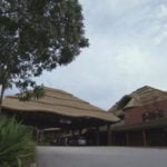 Newborn Abandoned at Disney's Animal Kingdom Lodge