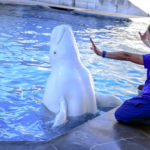 SeaWorld Orlando Gives Sneak Peek of New Behind-the-Scenes Inside Look