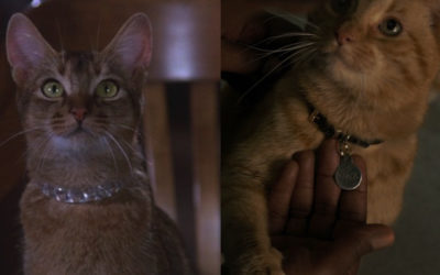 "Fan Theory: ""Captain Marvel"" Takes Place in the Same Universe as ""The Cat From Outer Space"""