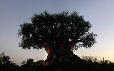 Construction Worker Suing Disney and Others for 2016 Injury at Disney's Animal Kingdom