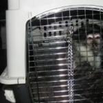 Monkeys Found in Van Parked at Walt Disney World's Grand Floridian Resort