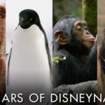 "Disney Celebrates 10 Years of Disneynature Ahead of ""Penguins"" Release"