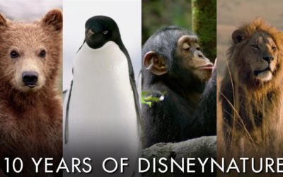 "Disney Celebrates 10 Years of Disneynature Ahead of ""Penguins"" Release"