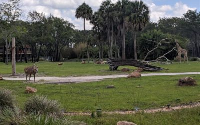 Top Sights of Nature's Beauty at Disney Parks and Resorts - LP Pro Tips