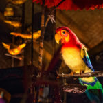 Disney Refutes Walt Disney's Enchanted Tiki Room Replacement Rumor