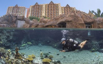 Disney's Aulani Resort Introduces New Up-Close Encounters at Rainbow Reef