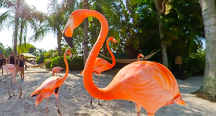 Discovery Cove At Seaworld Orlando Welcomes New Flamboyance Of Flamingos Laughingplace Com