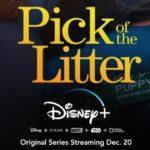 """Disney+ Announces Docuseries """"Pick of the Litter"""" to Start Streaming December 20"""