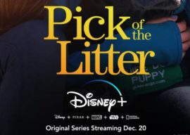 "Disney+ Announces Docuseries ""Pick of the Litter"" to Start Streaming December 20"