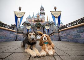 """Lady and the Tramp"" Stars Celebrate Disney+ Film Release With A Trip to Disneyland"