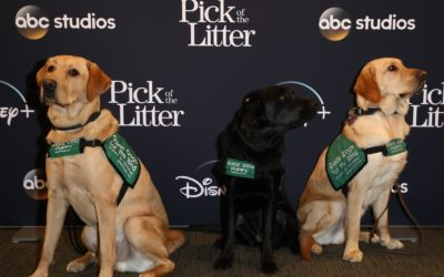 """""""Pick of the Litter"""" Comes to the Walt Disney Studios"""