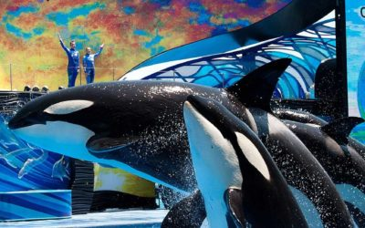 """SeaWorld Orlando to Replace """"One Ocean"""" Orca Show with """"Orca Encounter"""" on January 1"""