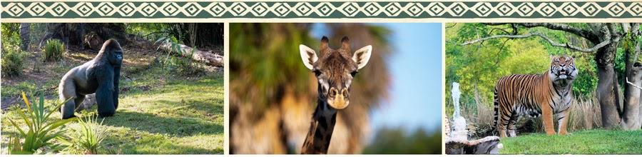 Animals at Disney's Animal Kingdom