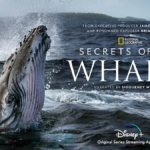 """Disney+ Reveals Trailer For New Four-Part National Geographic Series From James Cameron, Narrated by Sigourney Weaver, """"Secrets of the Whales"""""""