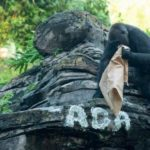 The Gorillas of Disney's Animal Kingdom Announce Name of Their Newest Family Member
