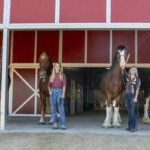 Disneyland Resort Introduces Five New Horses at Circle D Ranch To Be Seen on Main Street USA